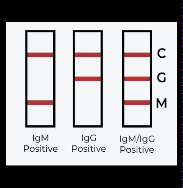 result test covid-19 igg igm positive
